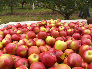 Credit: CBS Minnesota http://minnesota.cbslocal.com/top-lists/best-places-to-go-apple-picking-this-fall-near-the-twin-cities/
